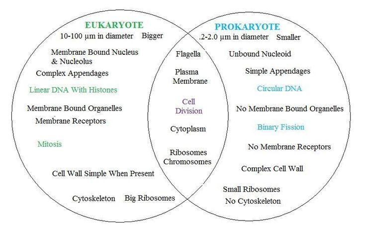 BioShare Prokaryotic Cells VirusViroid and Prions – Prokaryotic and Eukaryotic Cells Worksheet