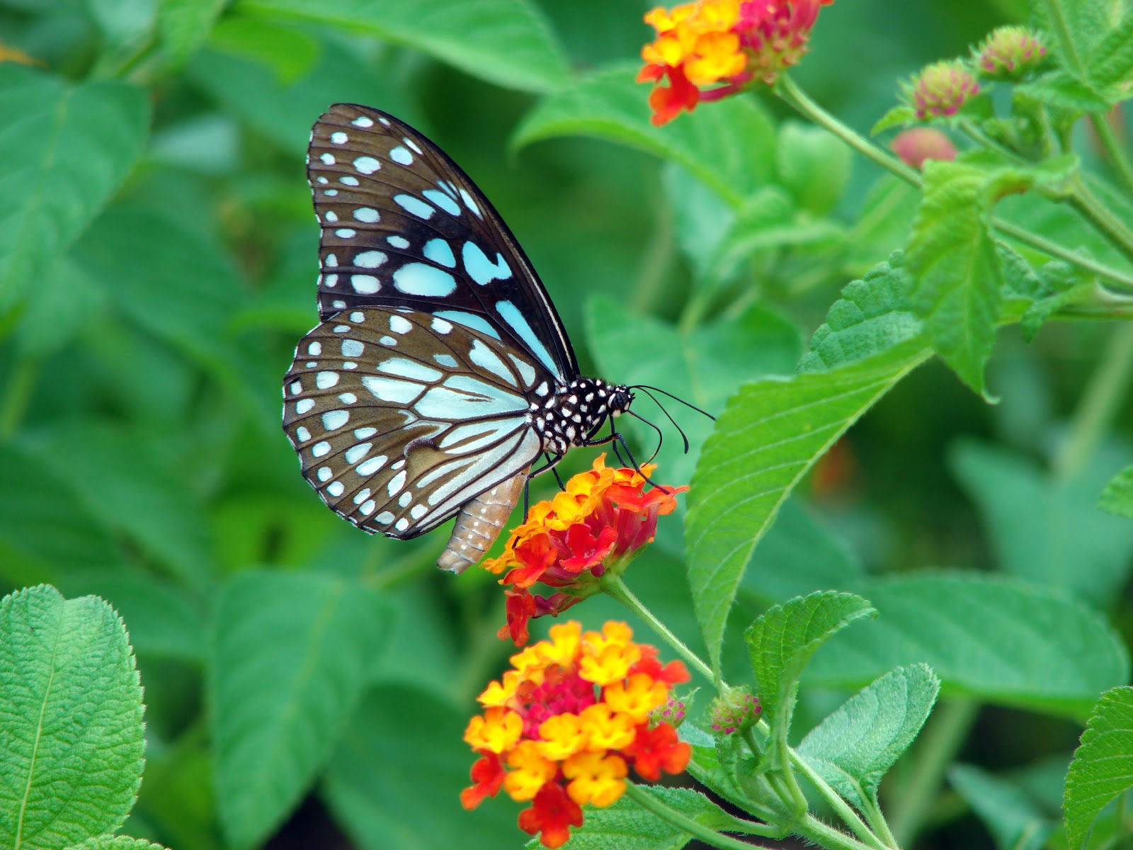 Http Alternatepen Blogspot Com 2012 11 The Butterfly Effectthe Html