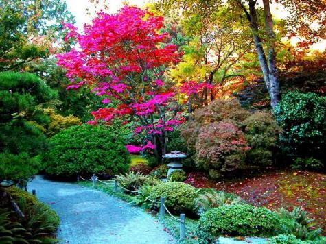 Arte y jardiner a los rboles en el jard n for Arboles para jardin