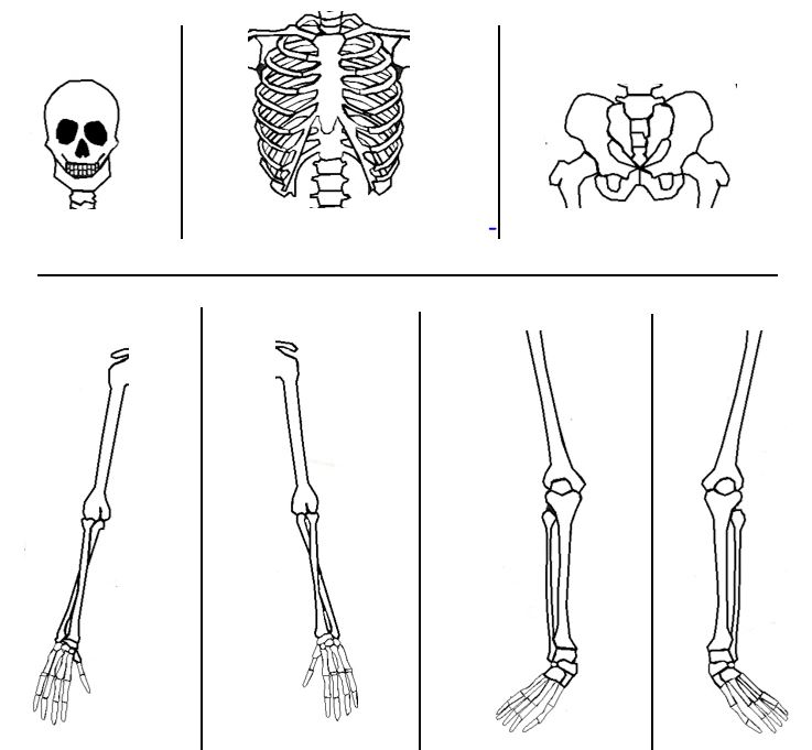 photograph regarding Printable Skeleton Parts named Unschool the Trainer: Bones, Bones, Bones