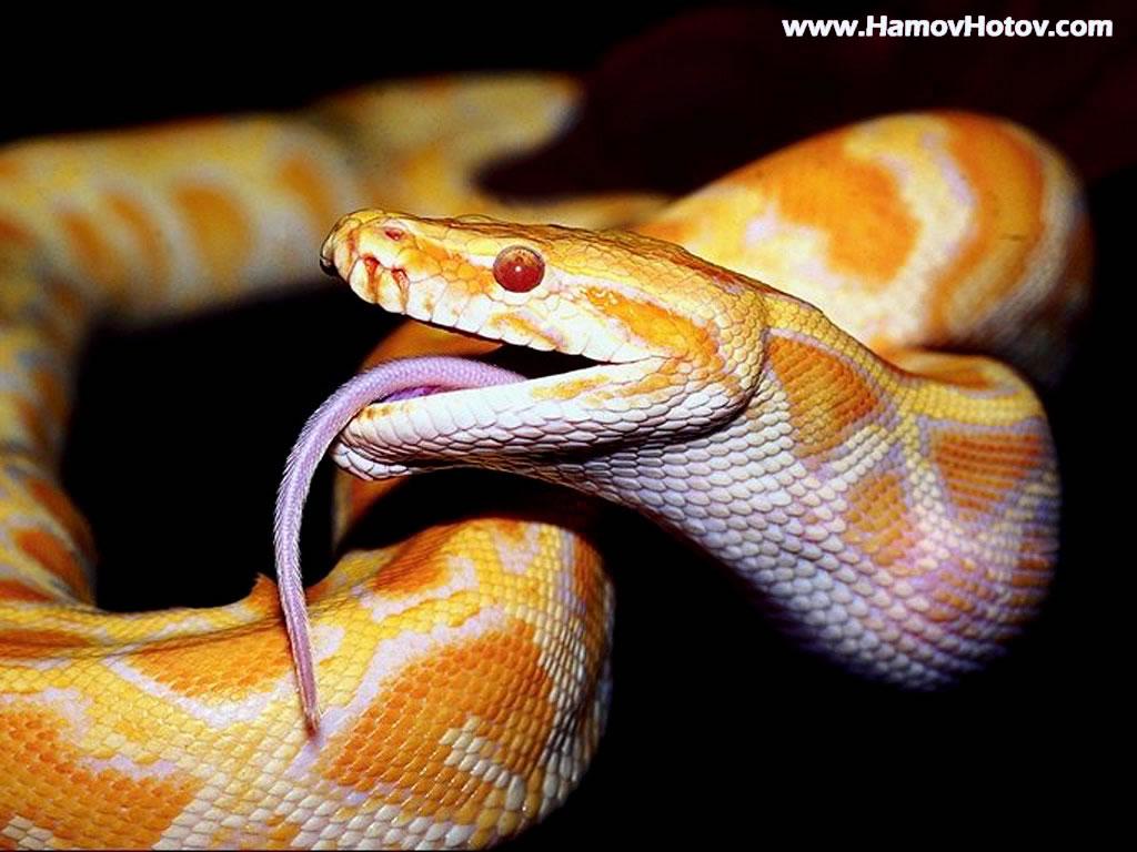 snake - photo #6