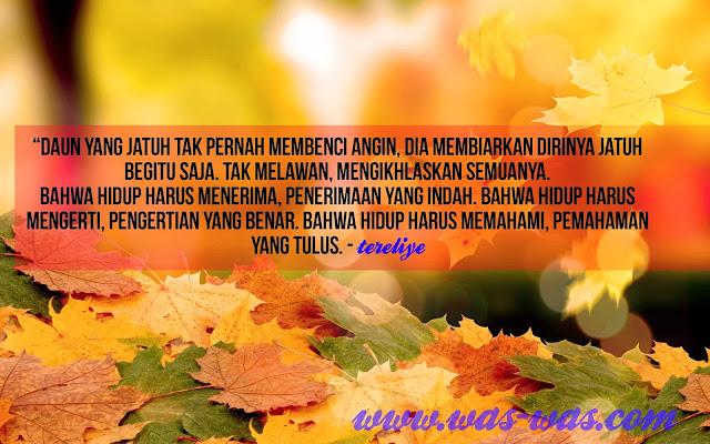 """Kumpulan Kata Mutiara Tereliye daun tak membenci angin"""