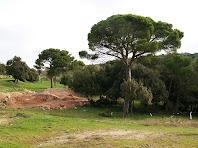 Pins a prop dels camps dels Roquerols