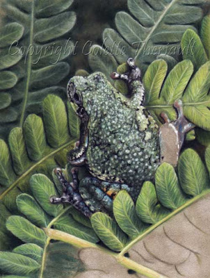 Frog and ferns Painting in progress by wildlife artist Colette Theriault