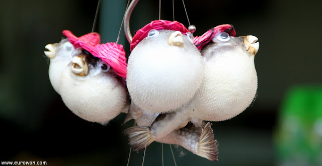 Peces globo con sombrero a la venta en Tai O