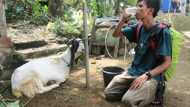 Nenggak susu murni