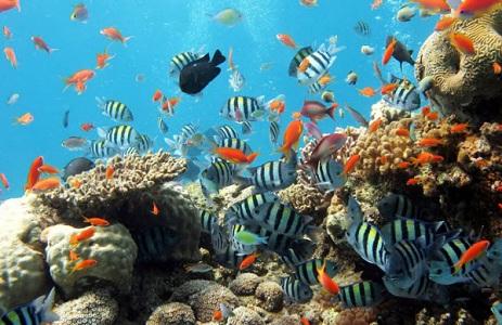 Đi câu biển, tìm cá ở đâu?