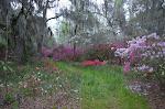 Flowers of Magnolia Gardens