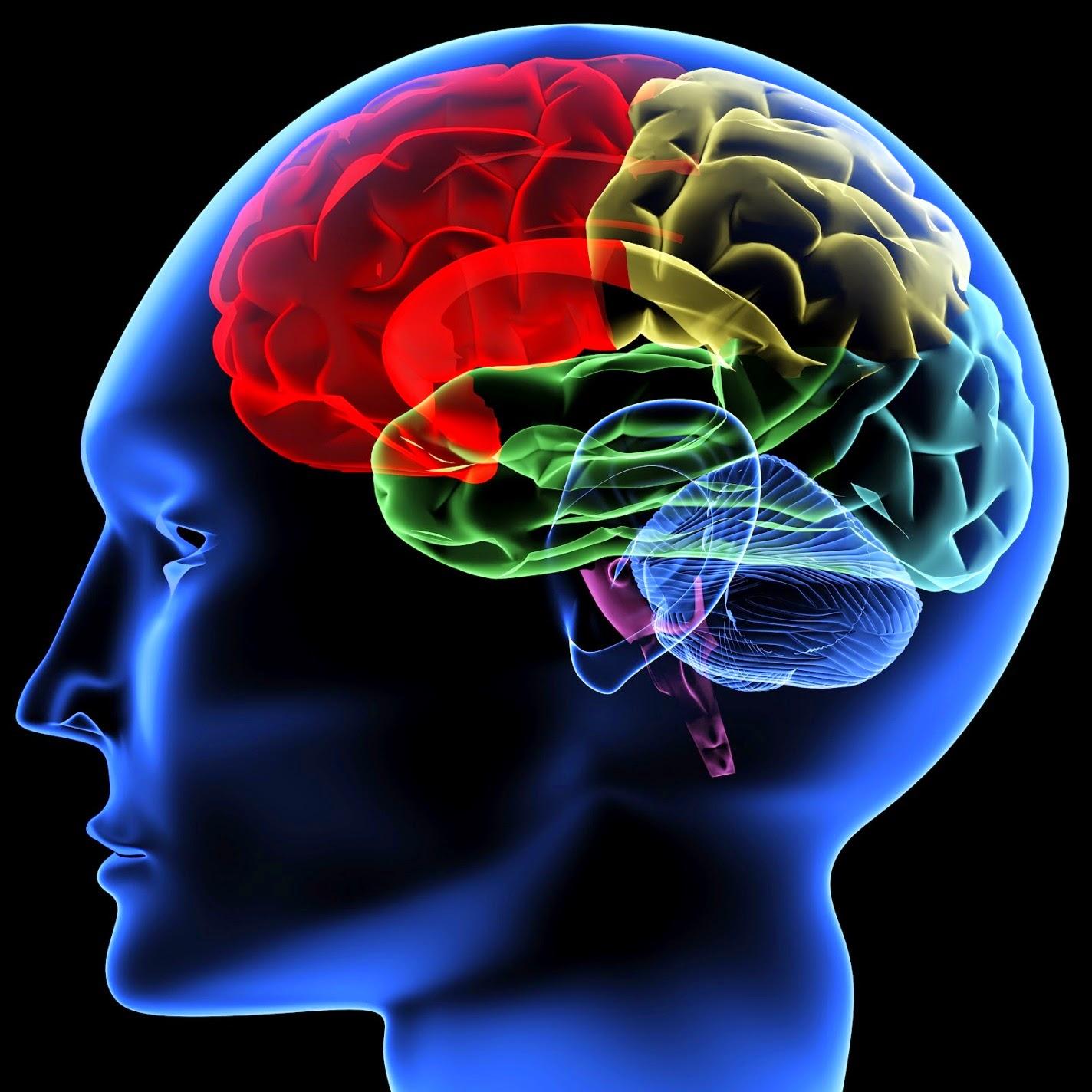 Otak manusia, periode keemasan