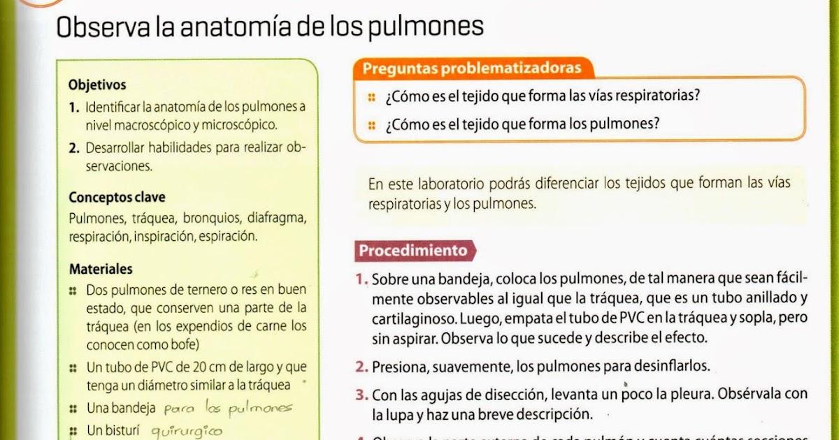 Lujoso Anatomía De Los Vertebrados Comparativo Una Guía Disección De ...