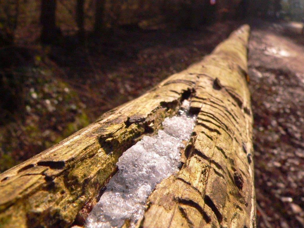 Naturpark Rheinland Hunderunde Köln Sonne Winter Spazierengehen Wandern See Schnee Eis Baumstamm