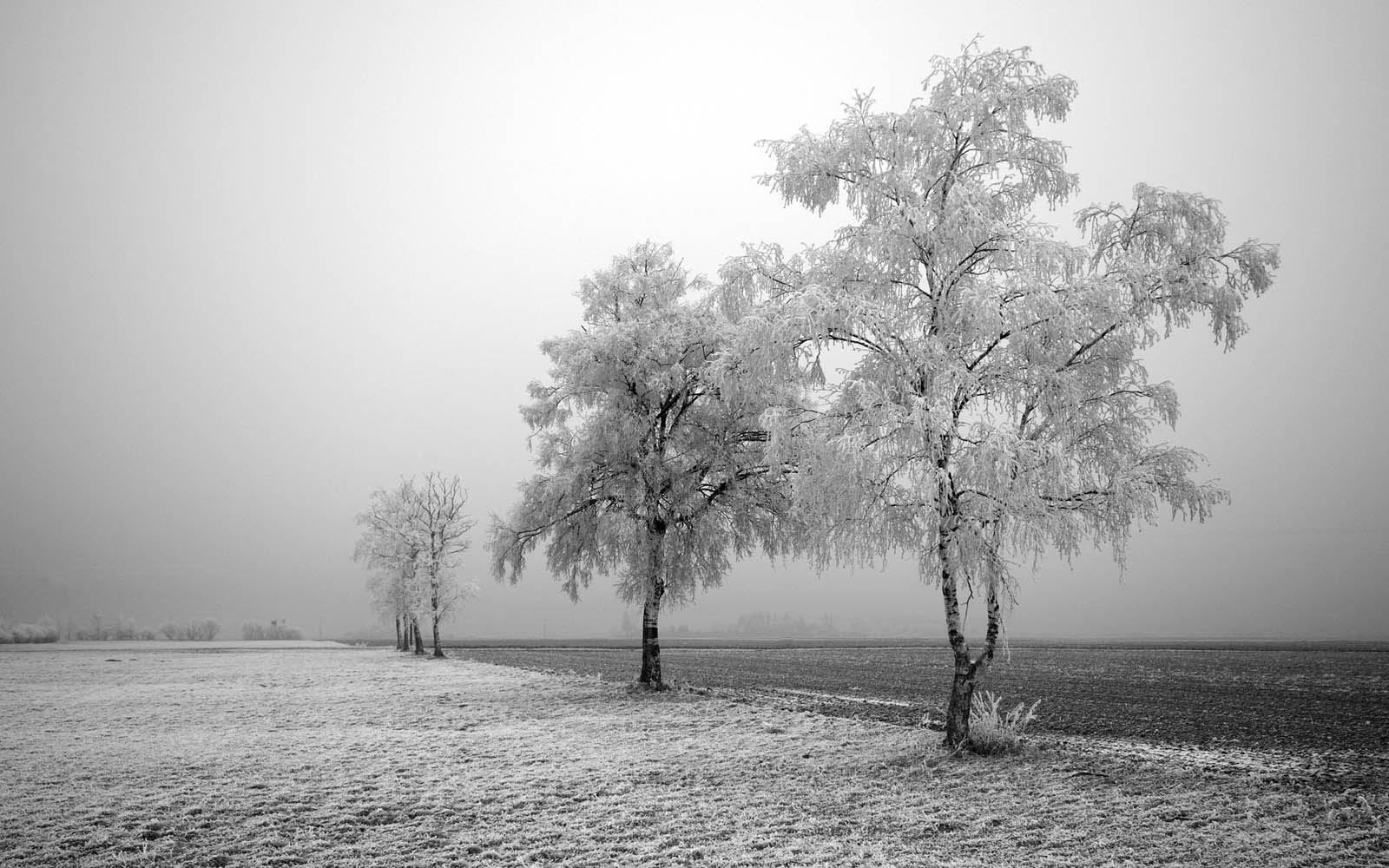 frozen trees widescreen wallpaper - photo #14