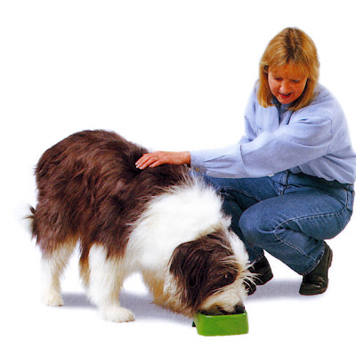 Alimentación equilibrada para tu perro