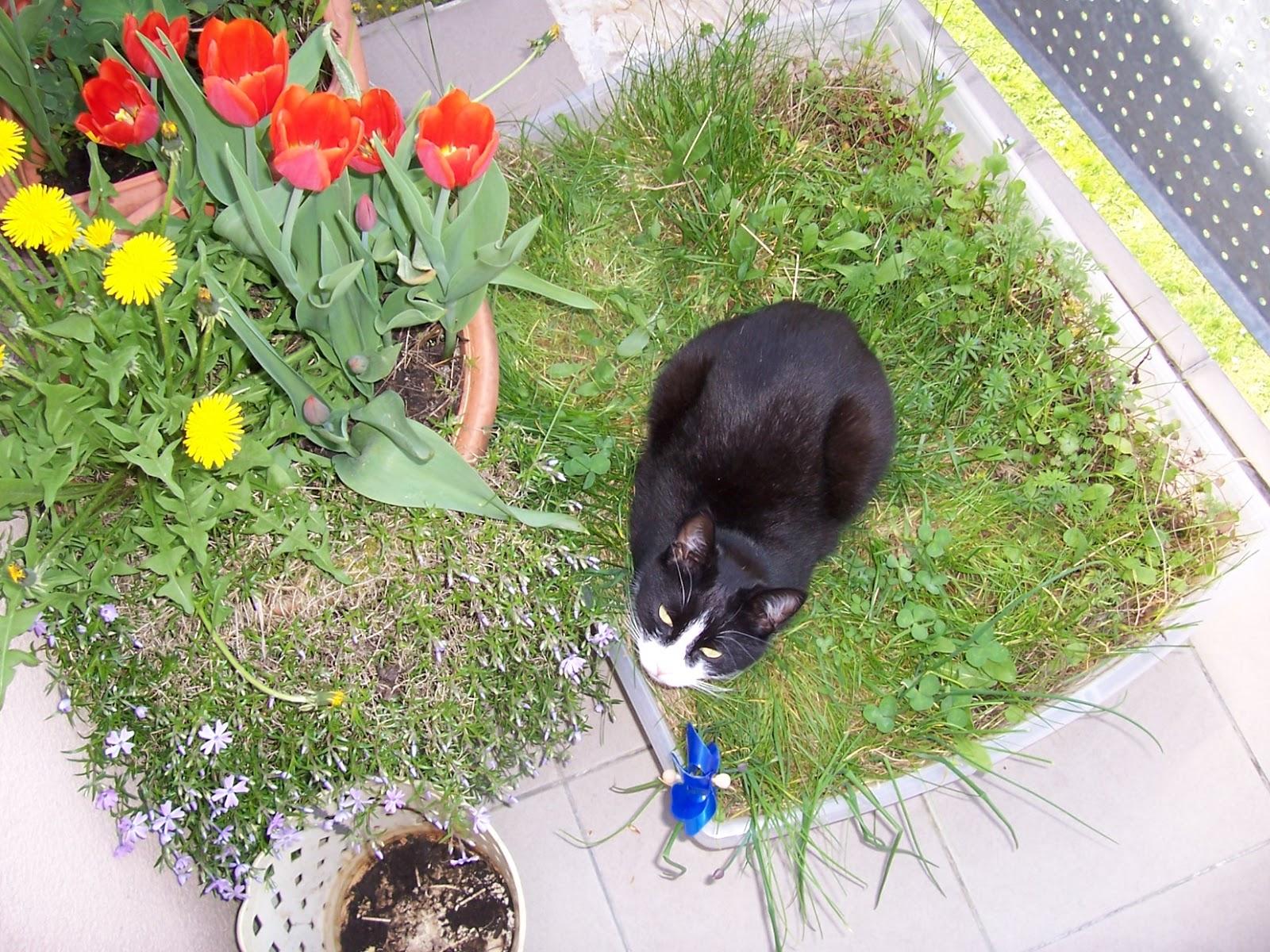 Katzenwissen eine mini wiese auf dem balkon f r wohnungskatzen selbermachen - Mini pool fur balkon ...
