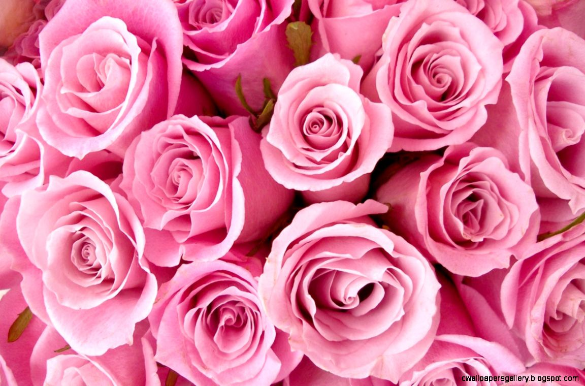 Pink roses Roses and June birth flower on Pinterest