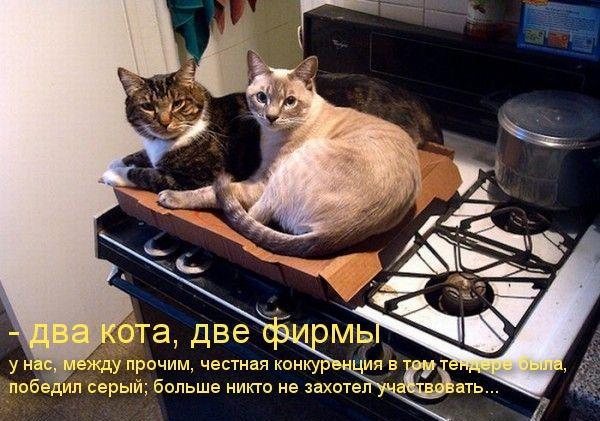 Два кота - две фирмы. У нас между прочим честная конкуренция в том тендере была, больше никто не захотел участвовать