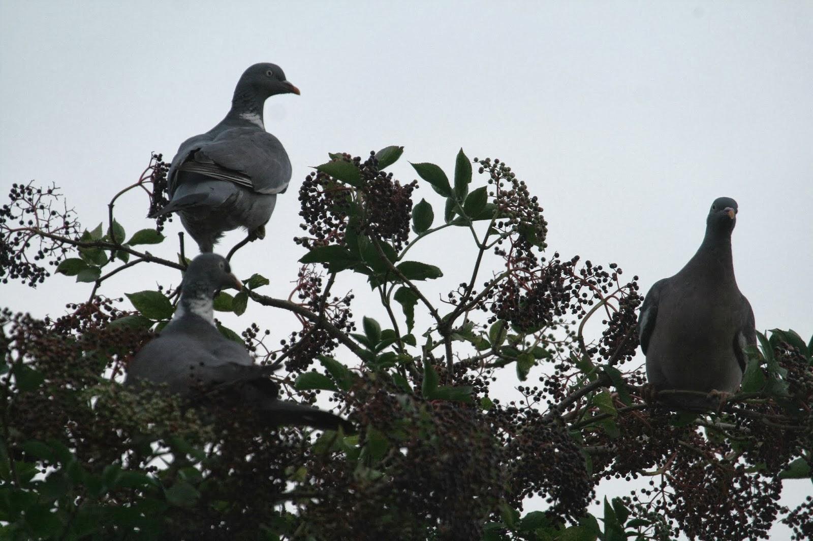 Pigeon Slow Juicer Spare Parts : Garden Bird Year: Wine & Gold
