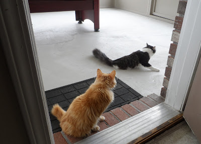 Anakin &amp; Mika on the screened porch