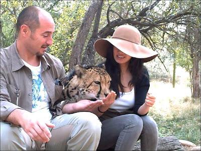 kruger national park africa cheetah