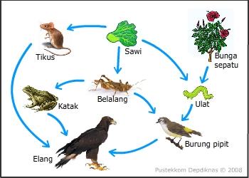 Ekosistem Hubungan Antara Komponen Biotik Dengan Komponen Bioti
