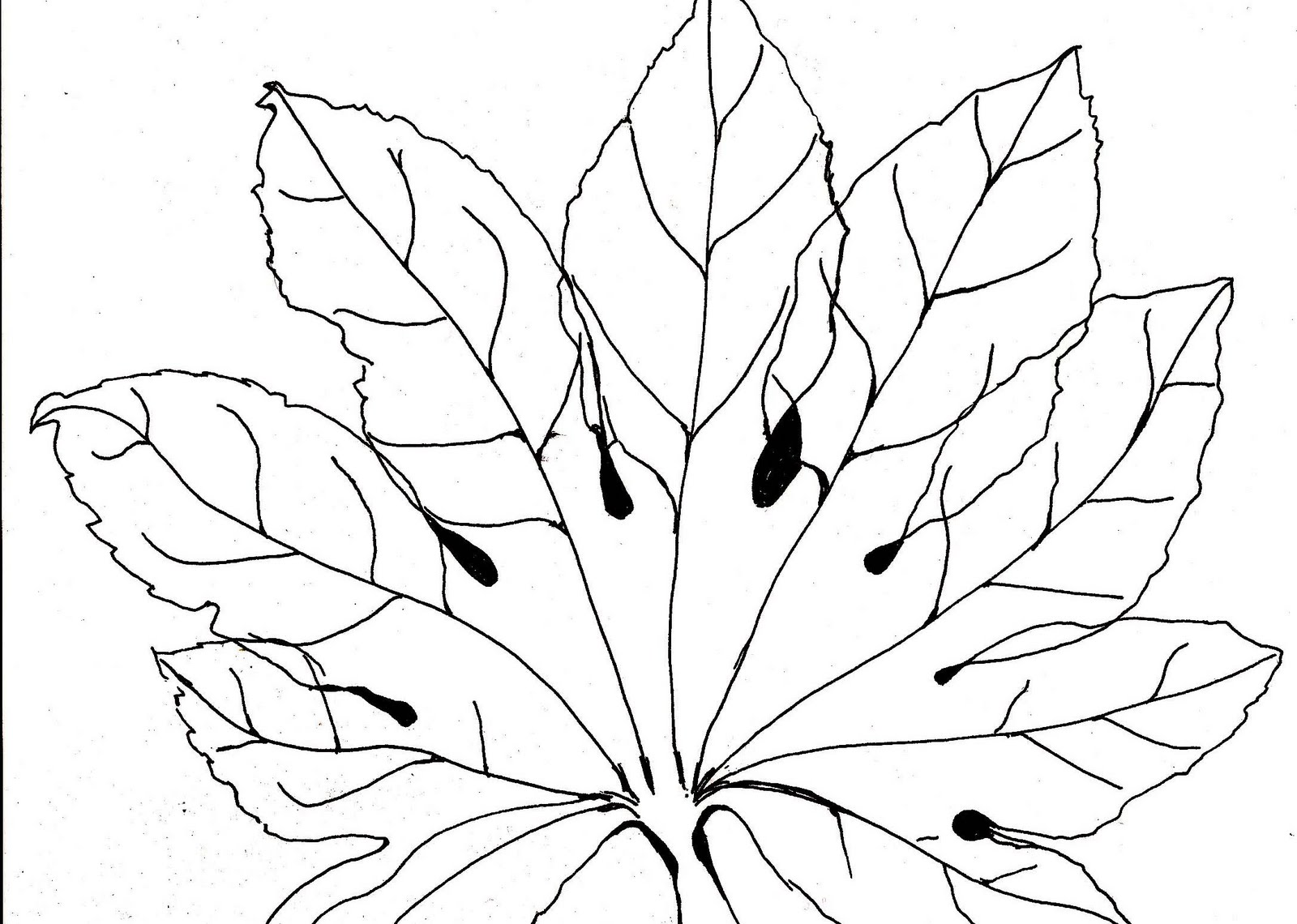 Hand-drawn fatsia leaf