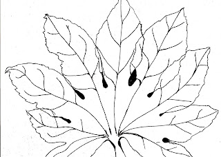 Pen and ink drawing of a Fatsia Japonica leaf.