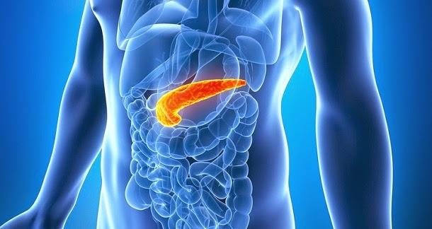 Pâncreas: Função, localização e doenças