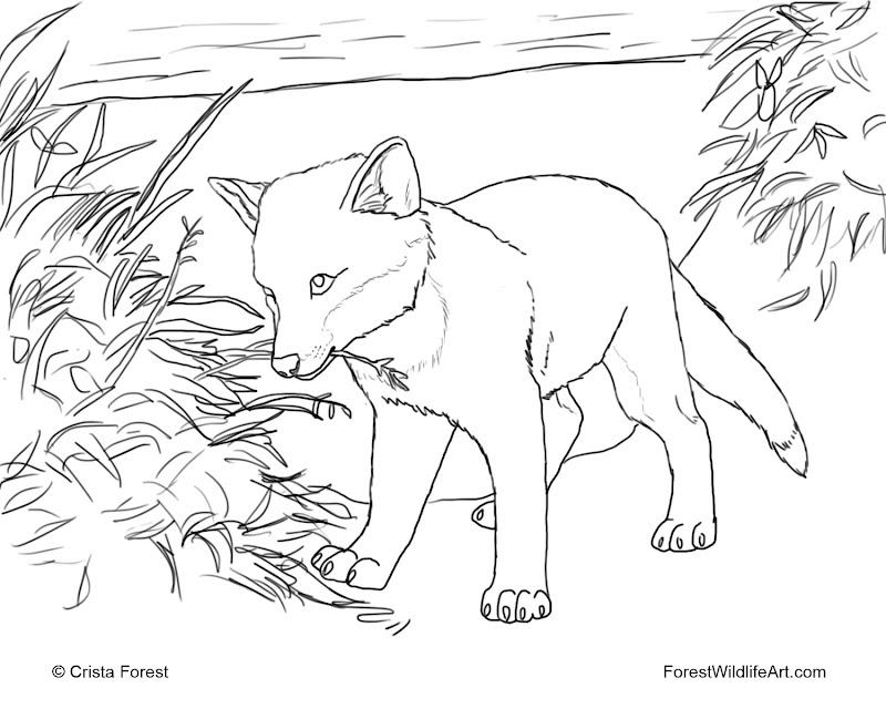 Forest Wildlife Art title=
