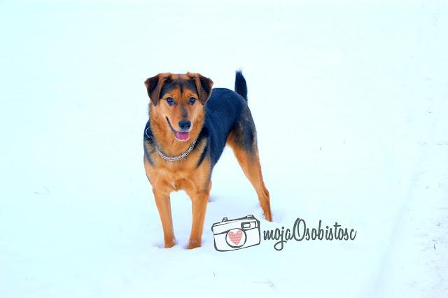 zimowa fotosesja z psem
