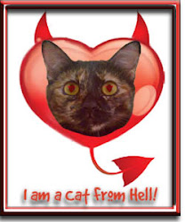 I am Tutu and I am a Cat From Hell!