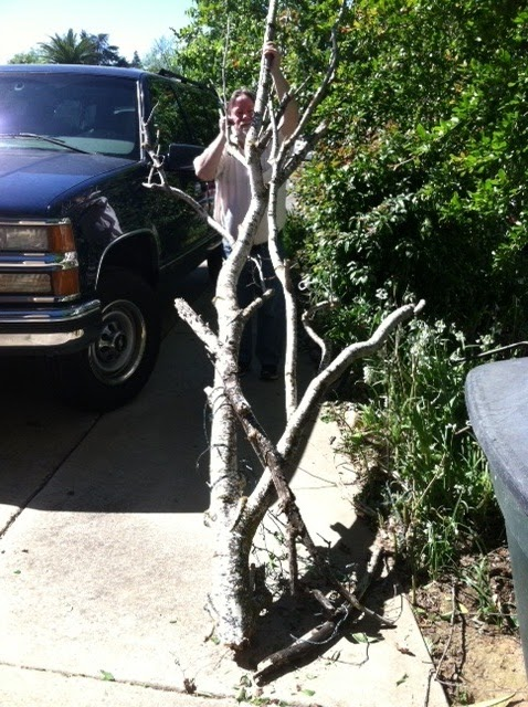 Rental Car Tree Sap