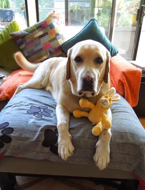 Yellow Labrador Cooper Easter Bunny
