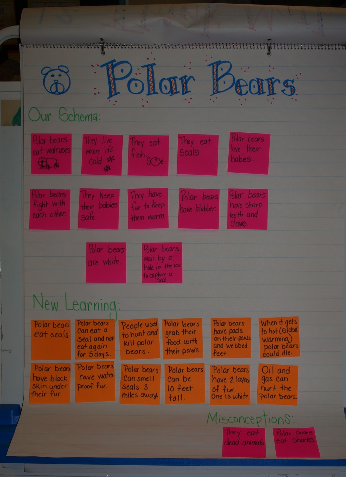 Arctic Animals Fun Mrs Jumps Class
