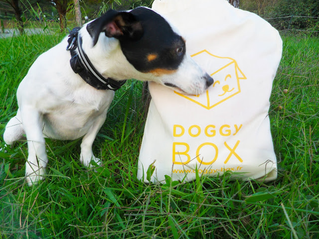Ma deuxième Doggy box de juillet