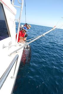 Pesca de atun a currican. MArbella.