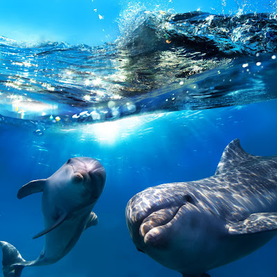 Delfines en el mar - Dolphins by Basem Habib