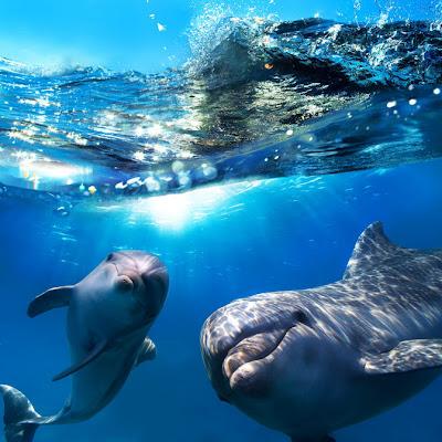 Delfines en el mar - Dolphins by Basem Habib