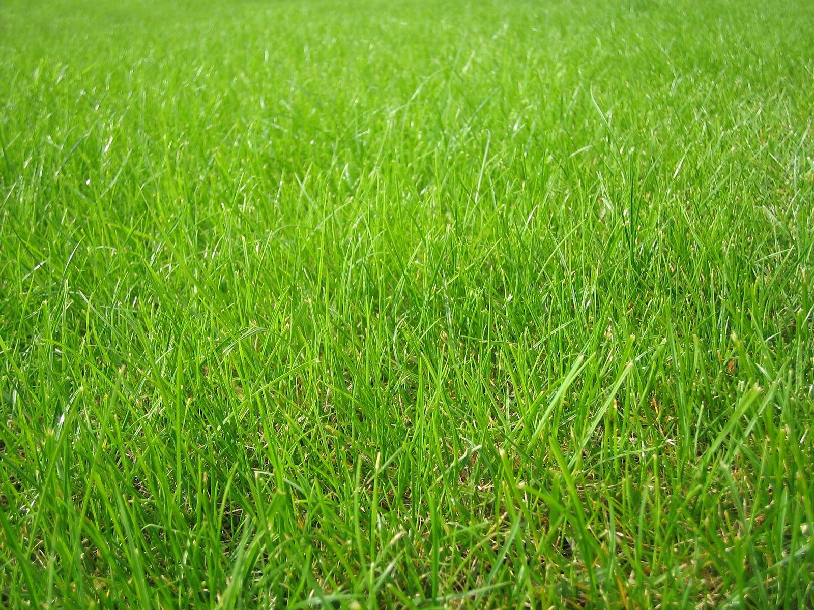 Газонная трава своими руками фото