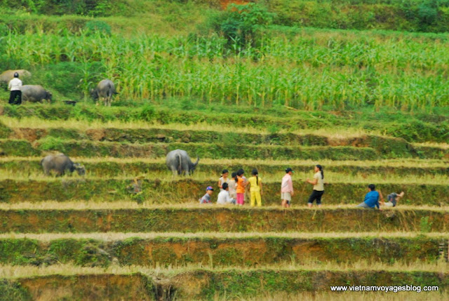 Village Quang Bình, Hà Giang