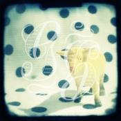 polka ewe