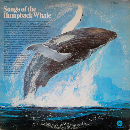 humpback whale and payne Innate within the humpback whale acoustic repertoire  payne, 1985 tyack &  sayigh, 1997 rekdahl et al, 2013 fournet et al, 2015 fournet.