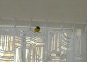 foto 7 - geelbuikje