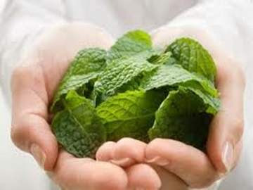 benefit of mint leaf