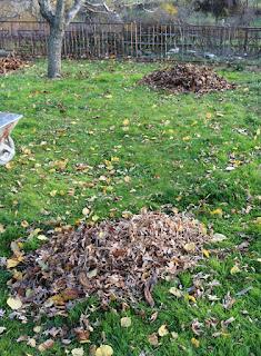A's leaf piles