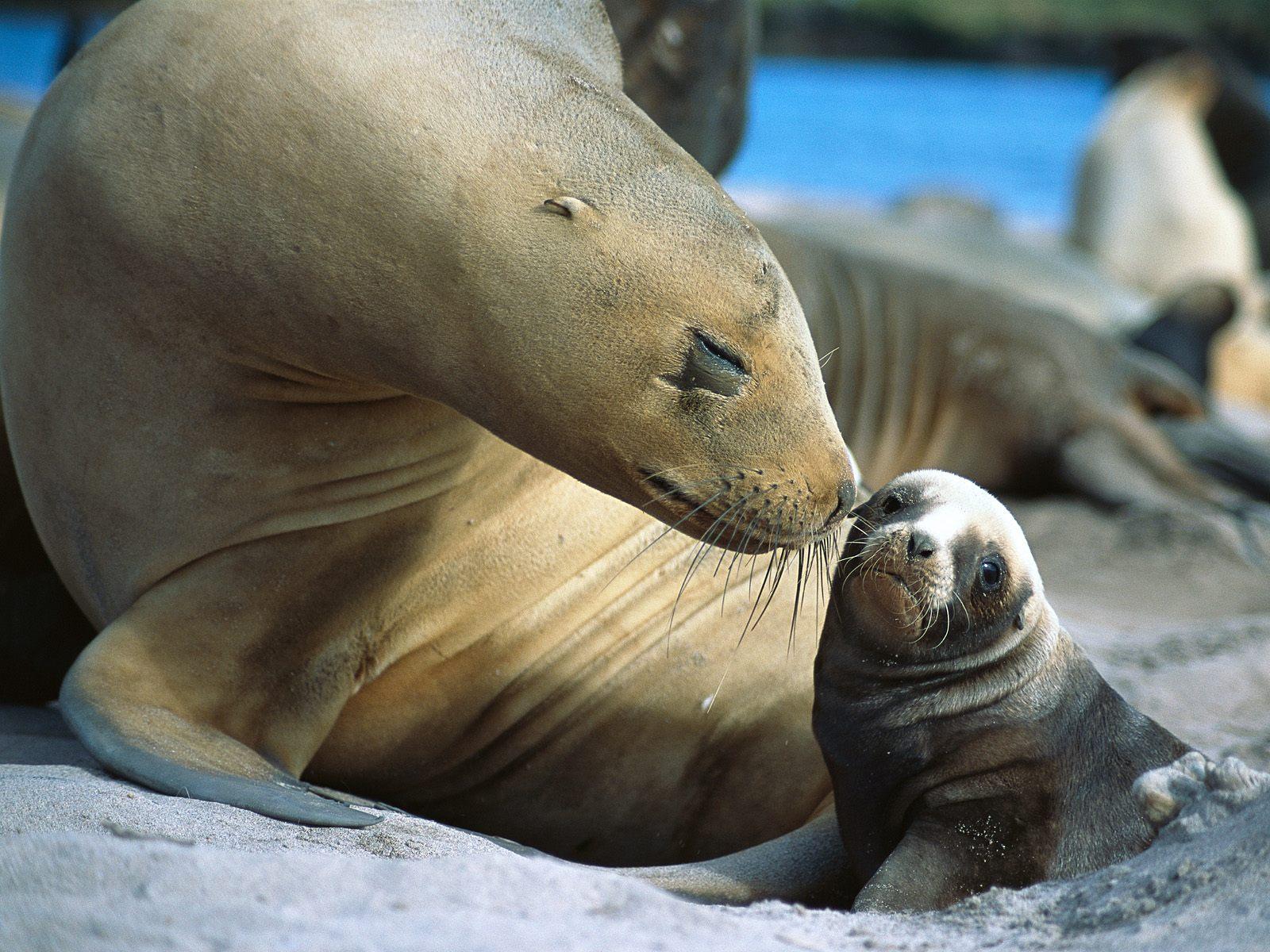 http://3.bp.blogspot.com/-_FtGyaif6gI/T6XxB-fOqKI/AAAAAAAAADQ/pOSo2YfRe-k/s1600/Antarctic_Fur_Seal.jpg