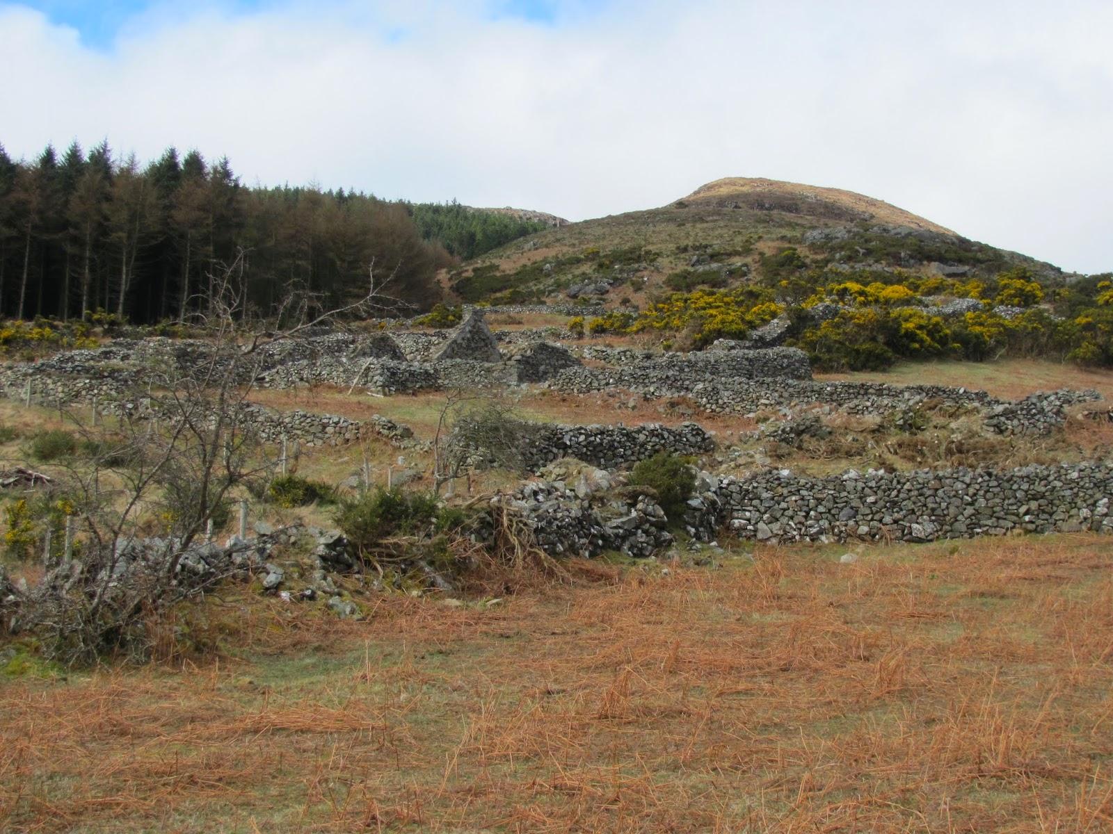 Tain Mountain Co. Louth Ireland