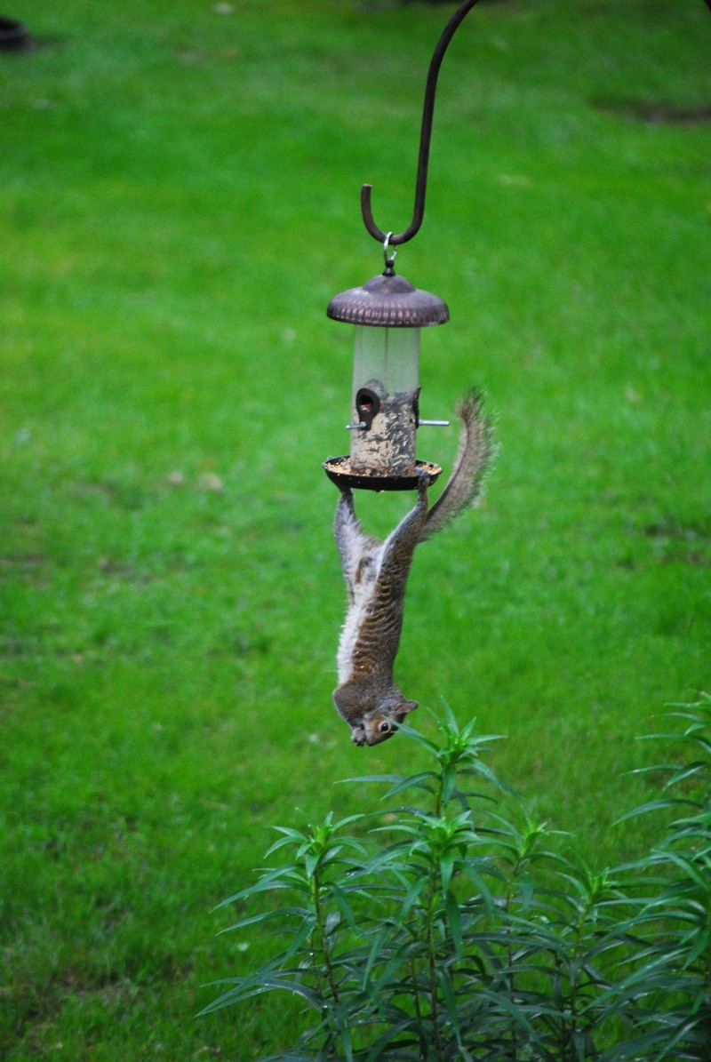 funny animal pictures, squirrel feeder