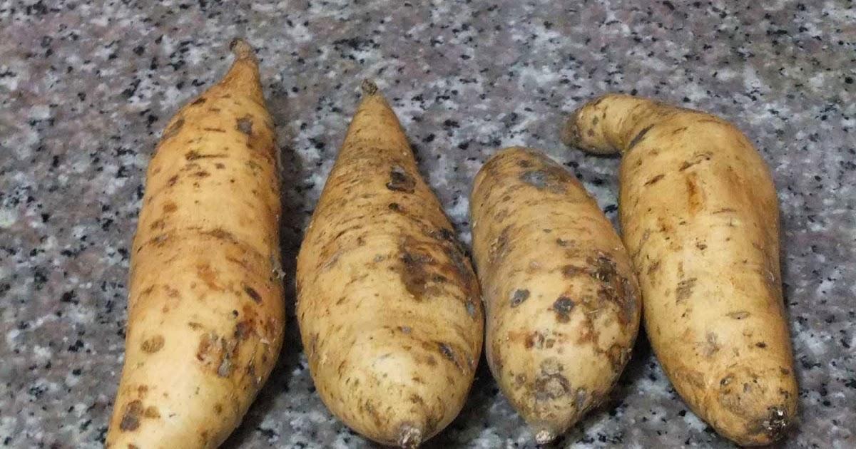 Tag: manfaat ubi jalar untuk diet