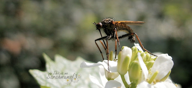 close up bug funny flying insect