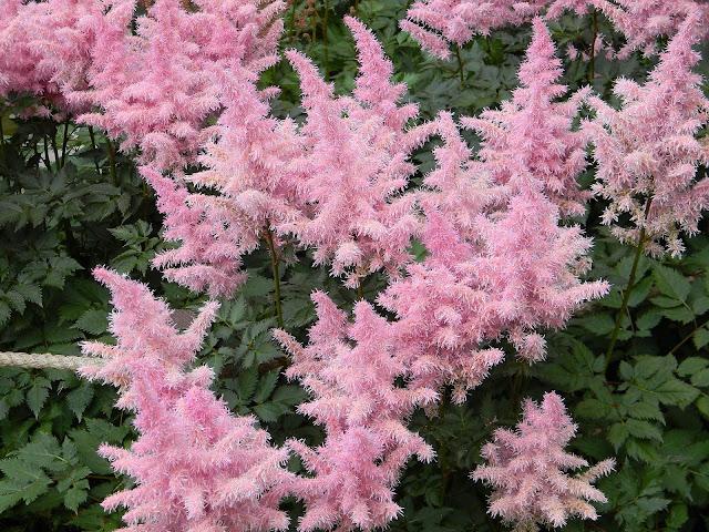 Rose Quartz & Serenity flowers